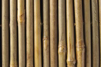 Simple bamboo stakes are the basic building materials for many home garden tepee trellises.