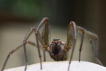 Spiders thrive in dark, warm environments.