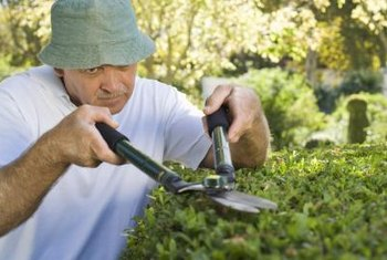 Pruning shears are helpful for shaping willows.