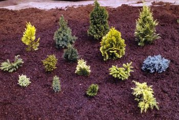 Keep mulch 2 to 3 inches from the base of landscape plants.