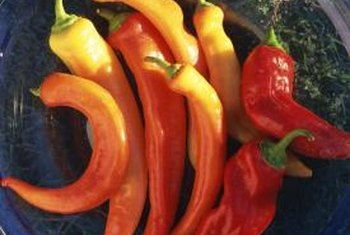 Sweet and hot pepper varieties of Capsicum annuum can be infected by fungi spreading disease.