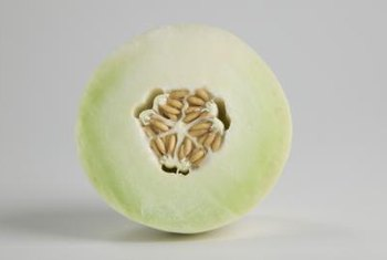 Stressed honeydew melons might not develop sugar.