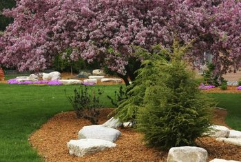 Cedar mulch has a natural, earthy color and pleasant scent.