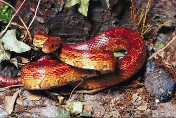 Removing brush piles may discourage snakes.
