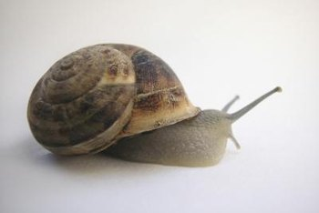 Give a snail an inch and it'll take the whole leaf.