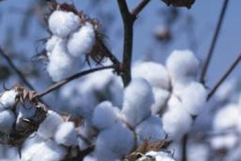 The parts of the cotton plant left after the cotton has been removed make a nutrient-rich compost.