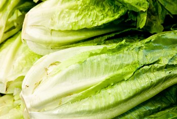 Cutting romaine lettuce above the ground keeps the leaves intact.