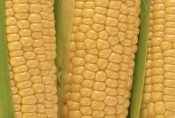 Protect your corn crop from corn borers and earworms.