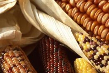 Ornamental corn is often used in wreaths, swags, flower arrangements and cornucopias.