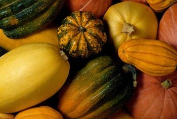 Start squash seeds indoors for an earlier harvest.