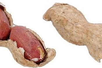 Peanuts have between one and six seeds per pod.