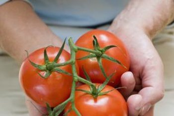 Grow smaller varieties of tomatoes indoors for better results.