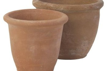 Succulents thrive in porous terracotta pots.