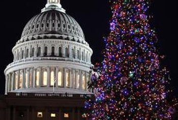 A healthy blue spruce's crowning achievement: becoming the U.S. Capitol Christmas tree.
