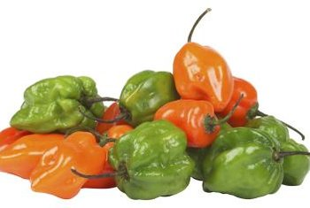 Habaneros pack a lot of heat in a small package.
