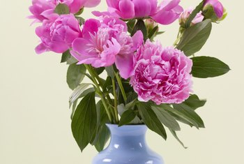 Cut peonies last about a week in a vase.