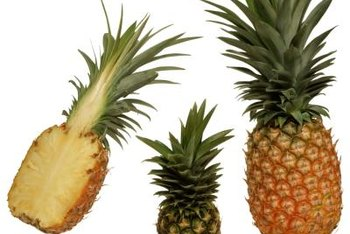 Use mature fruit such as pineapple or banana to create fermented fruit juice plant food.