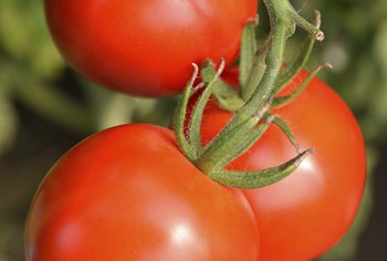 Large tomato varieties are more prone to blossom end rot than cherry types.