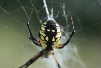 Spiders control pests in the garden, but become a pest inside your home.