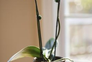 Potted orchids grow best in fast-draining media and bright indirect sunlight.