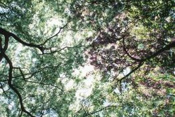 A healthy canopy is good for trees and gardeners.