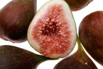 Fig trees can bear fruit ranging in color from green to dark purple.