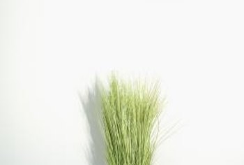 Grass can be grown in standard pots or terrariums.