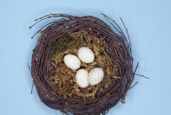 Removing an active bird's nest results in steep fines.