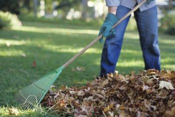Dead leaves can quickly turn into rich garden compost.