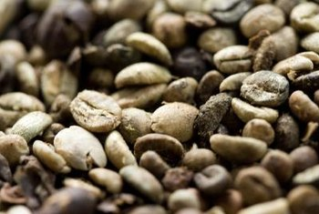Coffee plants are grown with raw coffee beans; roasted beans won't germinate.