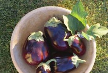 Eggplants come in a variety of shapes and colors.
