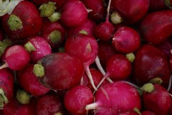 Fertile soil results in a healthy radish crop.