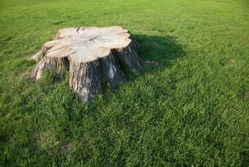 A stump in the middle of lawn makes an ideal flower garden base.
