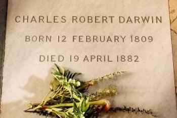 A branch of Berberis darwinii, a species discovered by Charles Darwin, decorates his grave.