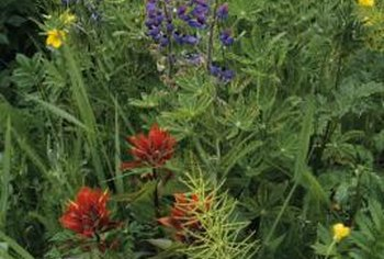 Wildflowers grow well in a variety of soil types.