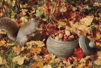Choose a nut-bearing tree for a squirrel box as a food source for them.