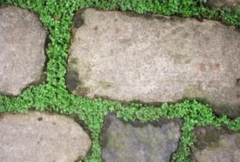 Plant tiny ground cover plants between flagstones for a natural look.