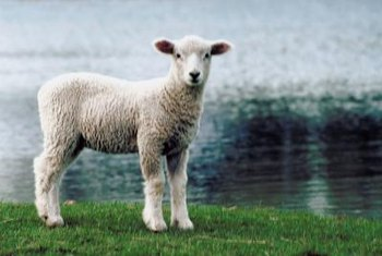 Wool protects plants from the elements just as it protects sheep.