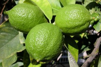 """Limelight"" won't bring citrus to your garden, but it will deliver on color."