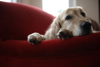 The chemical fumes from furniture and carpet cleaning products can trigger or worsen respiratory ailments in pets.
