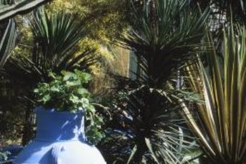 Many species of palm survive the winter when sheltered from the elements.