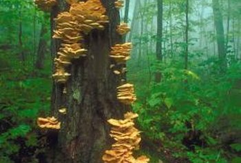 Yellow fungus in a forest is certainly noticeable.