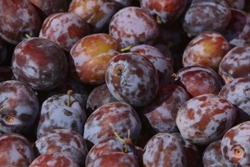Fertilizer improves a plum tree's productivity throughout the growing season.