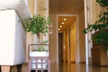 Potted plants can help bring the outdoors into your living spaces.