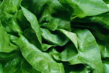 Butter lettuce is a loose-leaf lettuce with a mild flavor.