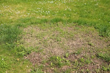 How to Plant Grass Seed in Spring