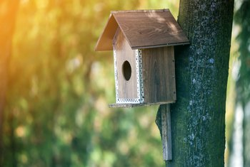 How to Attach a Birdhouse to a Tree Without Damage