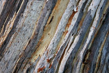 What Do I Wrap a Tree with When the Bark Has Been Scraped?