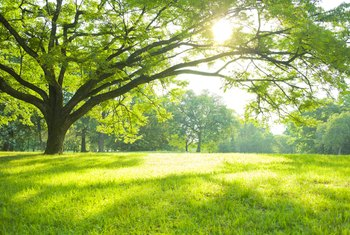 What Kinds of Trees Should Be Planted in the Full Sun?