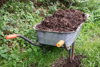 How to Control Ants in a Compost Pile